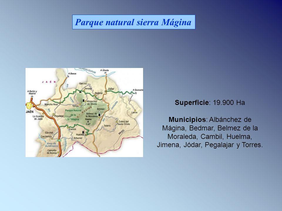 Parque natural sierra Mágina Superficie: 19.900 Ha Municipios: Albánchez de Mágina, Bedmar, Belmez de la Moraleda, Cambil, Huelma, Jimena, Jódar, Pegalajar y Torres.
