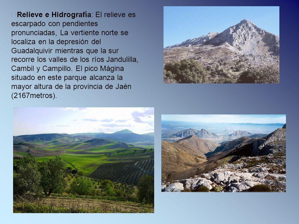 Relieve e Hidrografía: El relieve es escarpado con pendientes pronunciadas, La vertiente norte se localiza en la depresión del Guadalquivir mientras q