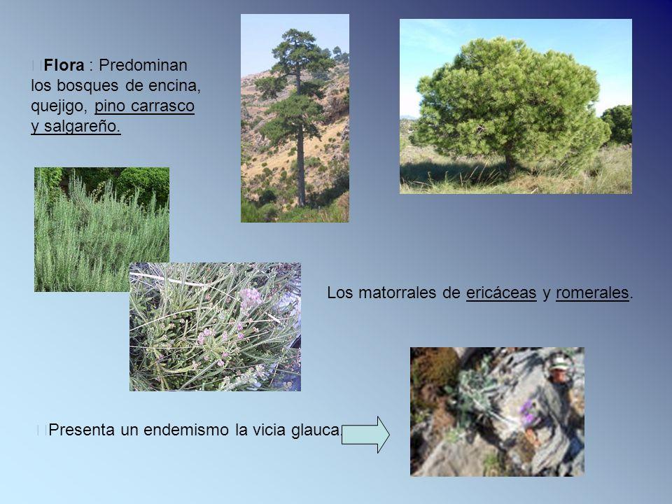 Flora : Predominan los bosques de encina, quejigo, pino carrasco y salgareño. Los matorrales de ericáceas y romerales. Presenta un endemismo la vicia