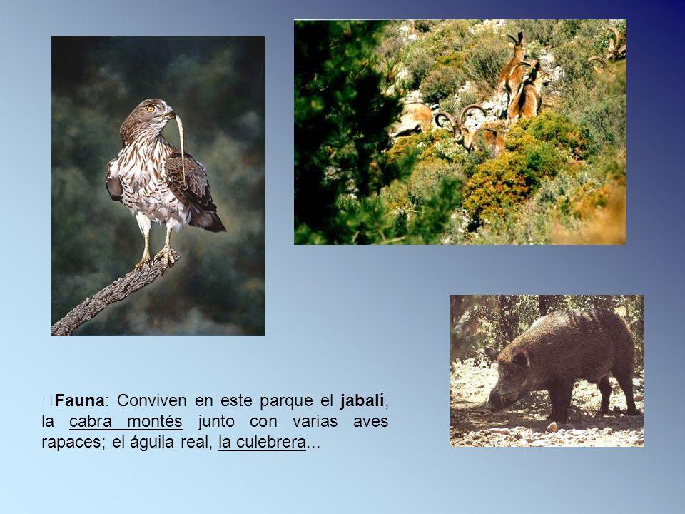 Fauna: Conviven en este parque el jabalí, la cabra montés junto con varias aves rapaces; el águila real, la culebrera...