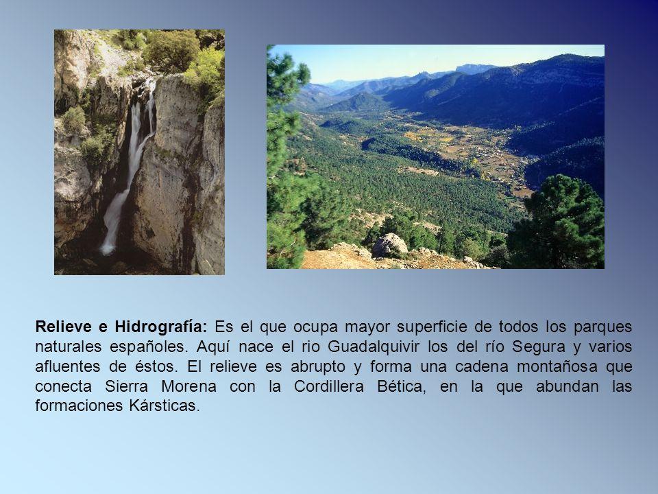 Relieve e Hidrografía: Es el que ocupa mayor superficie de todos los parques naturales españoles. Aquí nace el rio Guadalquivir los del río Segura y v