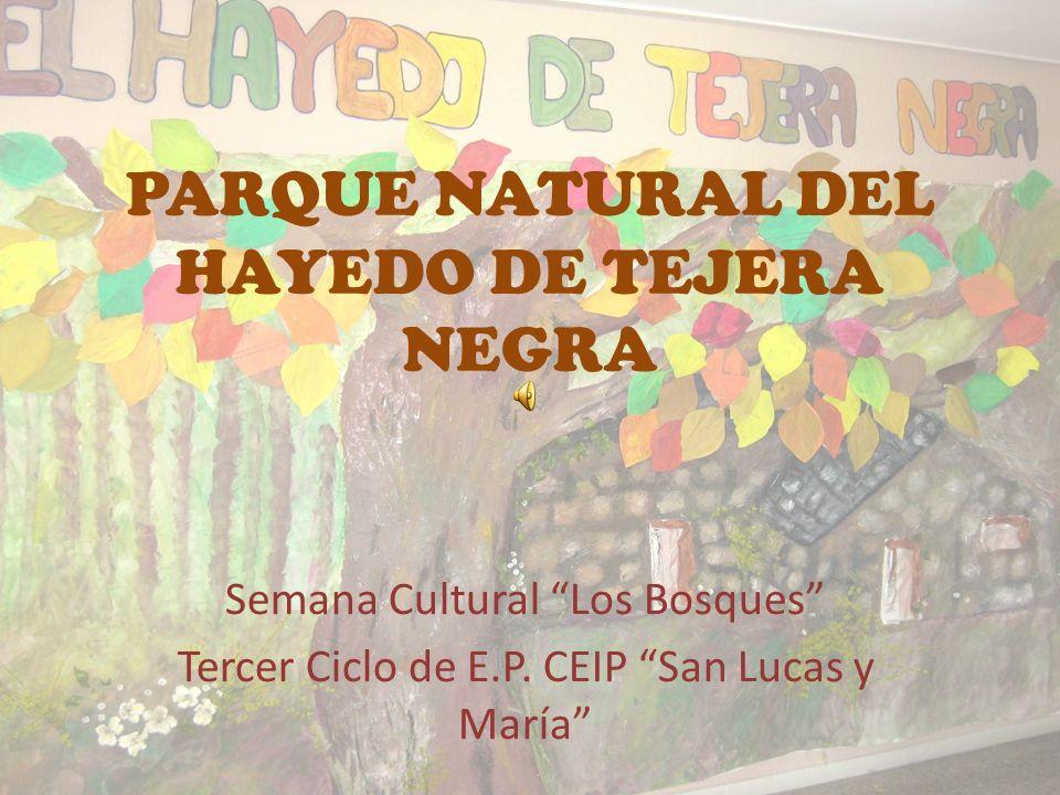 PARQUE NATURAL DEL HAYEDO DE TEJERA NEGRA Semana Cultural Los Bosques Tercer Ciclo de E.P.