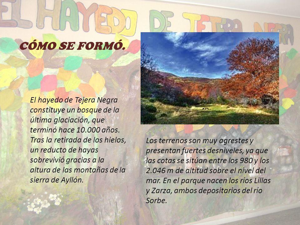 PARQUE NATURAL DEL HAYEDO DE TEJERA NEGRA Semana Cultural Los Bosques Tercer Ciclo de E.P. CEIP San Lucas y María