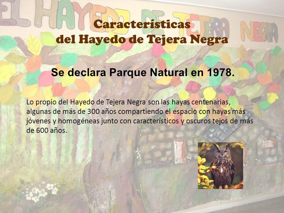 El hayedo de Tejera Negra constituye un bosque de la última glaciación, que terminó hace 10.000 años. Tras la retirada de los hielos, un reducto de ha