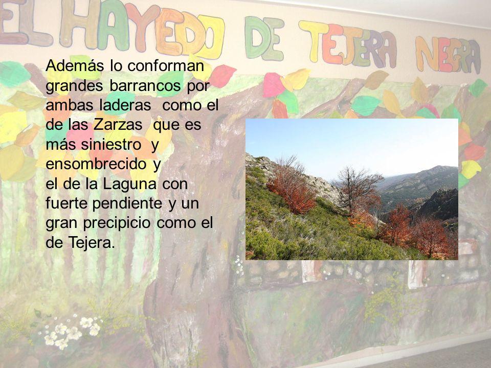 El Parque Natural del Hayedo de Tejera Negra está comprendido en el tramo alto de los dos valles de tipo fluvial. Esos dos valles reciben el nombre de