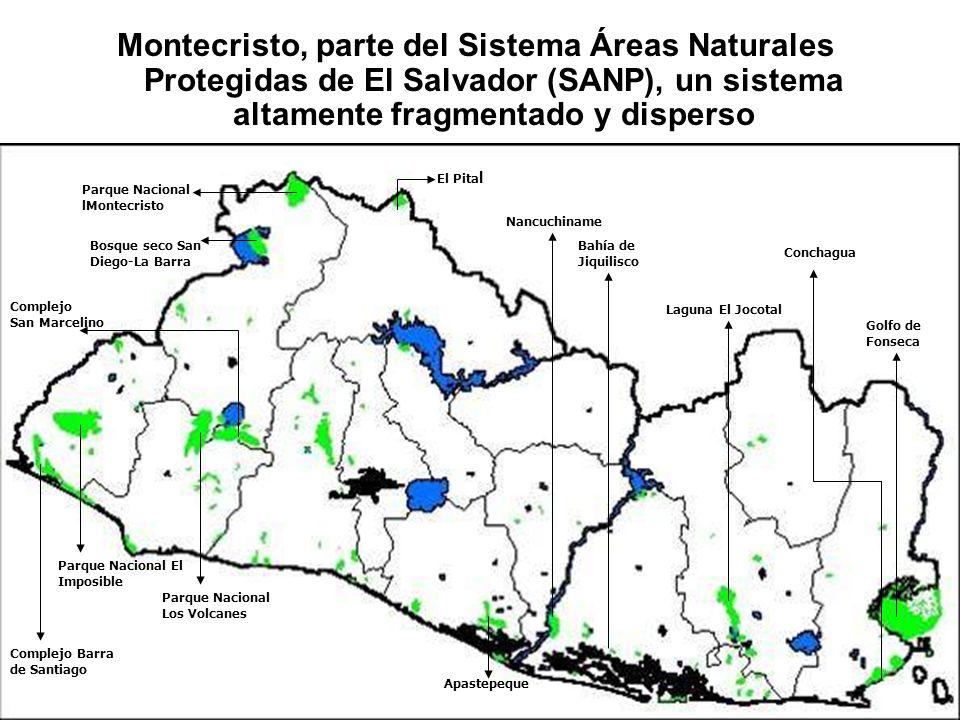 Montecristo, parte del Sistema Áreas Naturales Protegidas de El Salvador (SANP), un sistema altamente fragmentado y disperso Parque Nacional El Imposi