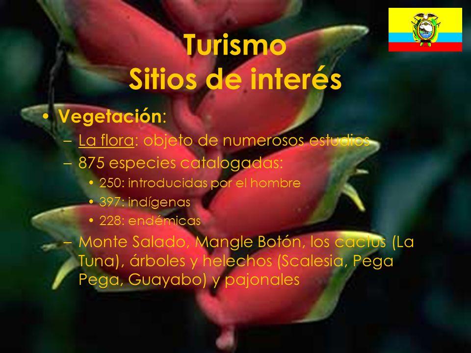 28 Turismo Sitios de interés Vegetación : –La flora: objeto de numerosos estudios –875 especies catalogadas: 250: introducidas por el hombre 397: indí