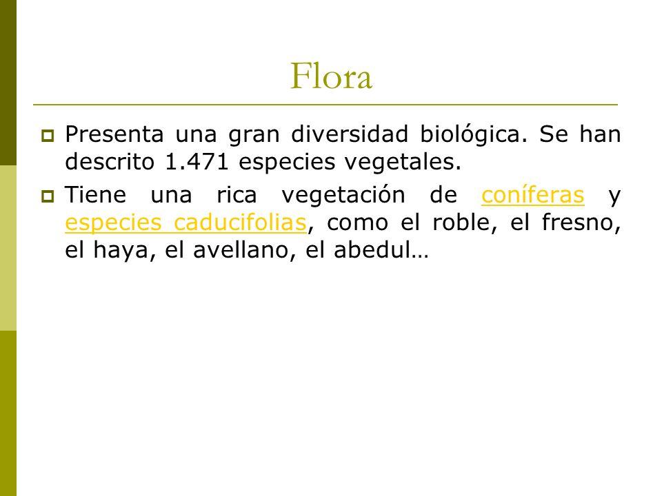 Flora Presenta una gran diversidad biológica.Se han descrito 1.471 especies vegetales.