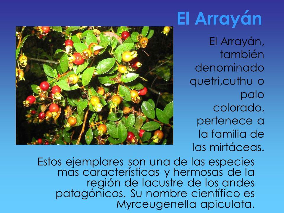 Ubicación Geográfica El parque nacional Los Arrayanes se encuentra al sur de la Republica Argentina y al suroeste de la provincia de Neuquén, a orilla