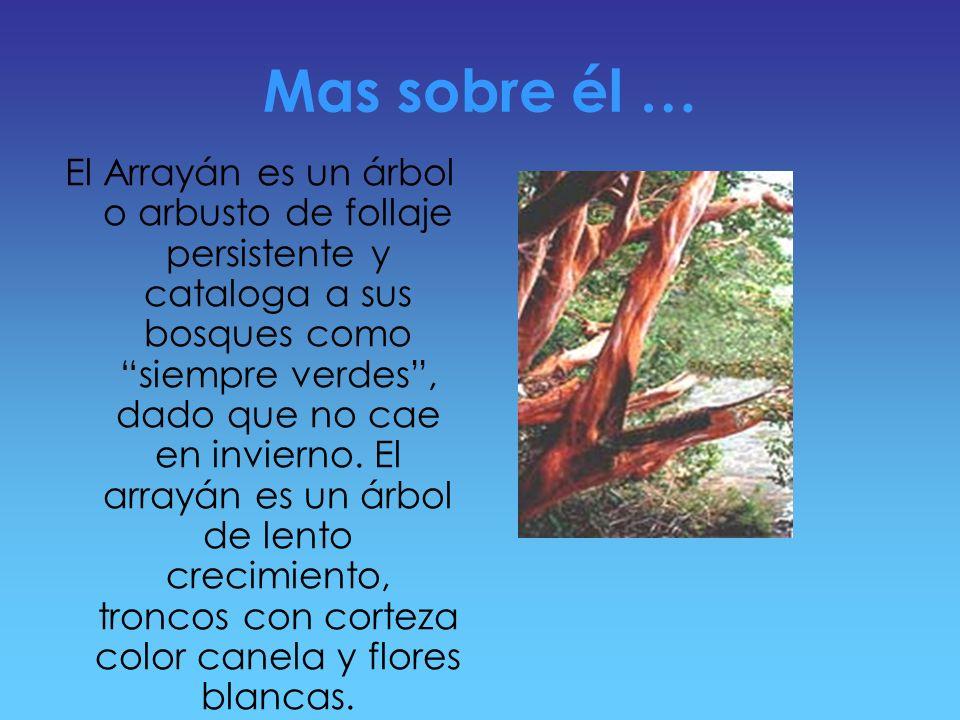 Estos ejemplares son una de las especies mas características y hermosas de la región de lacustre de los andes patagónicos. Su nombre científico es Myr