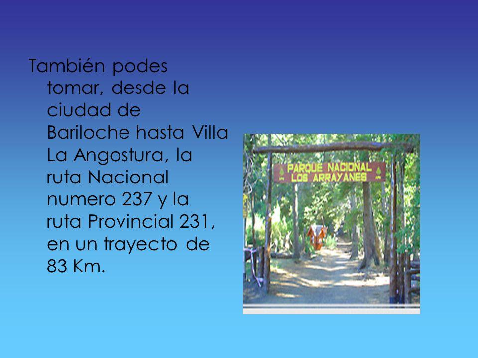 ¿Como llegar? Para llegar al bosque de los arrayanes debes tomar la ruta nacional numero 234 desde San Martín de los Andes hasta Villa La Angostura, d