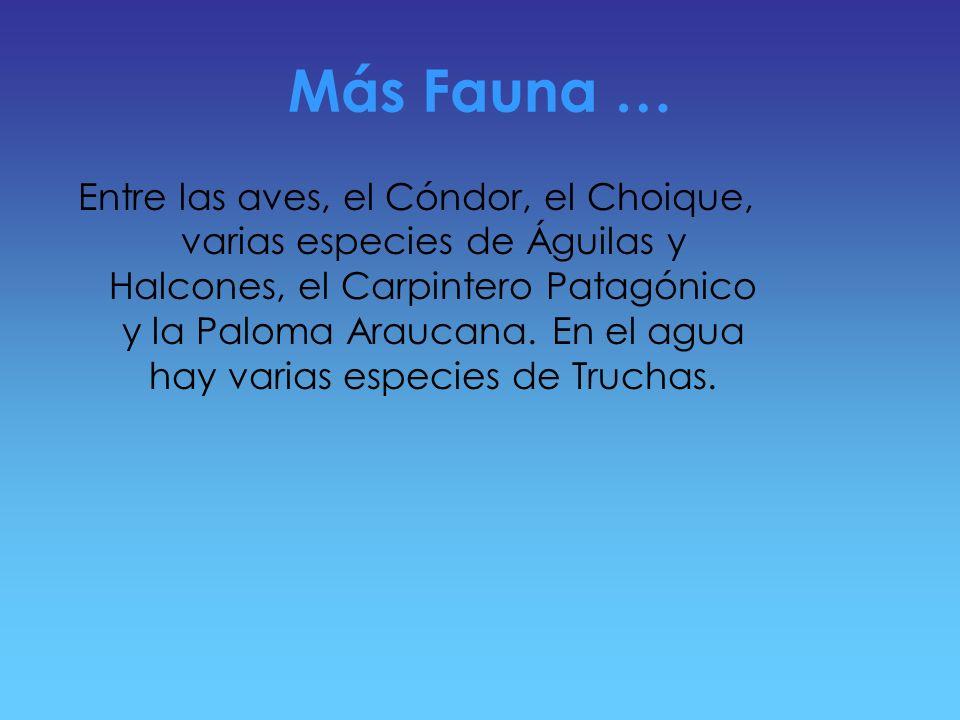 Fauna Entre las aves que habitan el parque se encuentran Zorzales patagónicos, Rayaditos y Chucaos. A orillas del lago se observan Hualas y Garzas Bru
