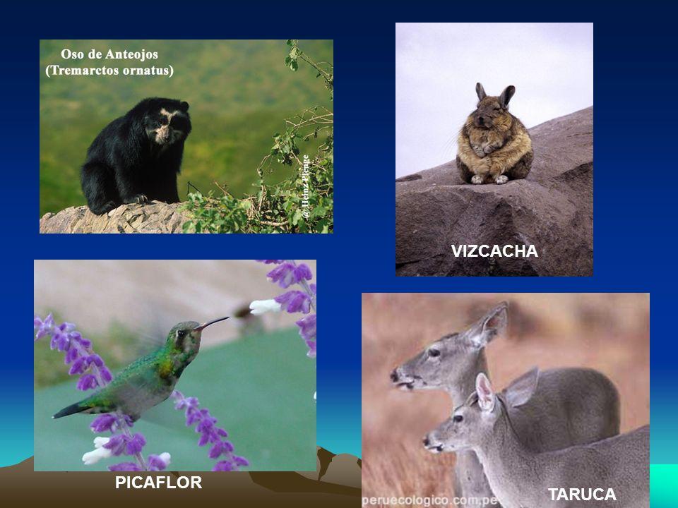 VIZCACHA TARUCA PICAFLOR