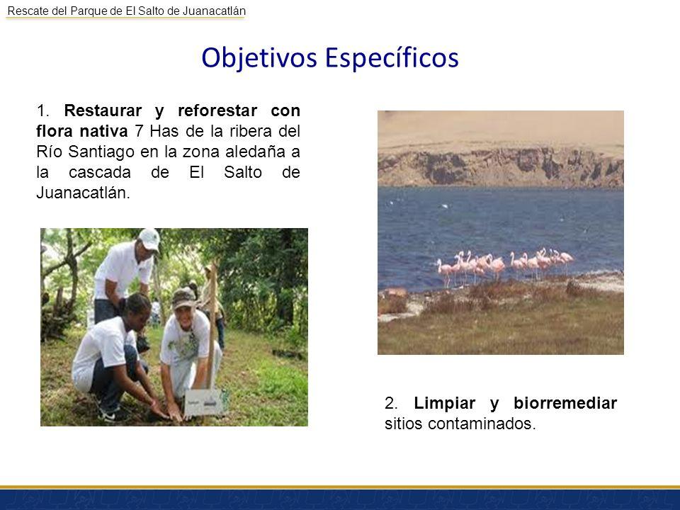 Rescate del Parque de El Salto de Juanacatlán Objetivos Específicos 1. Restaurar y reforestar con flora nativa 7 Has de la ribera del Río Santiago en