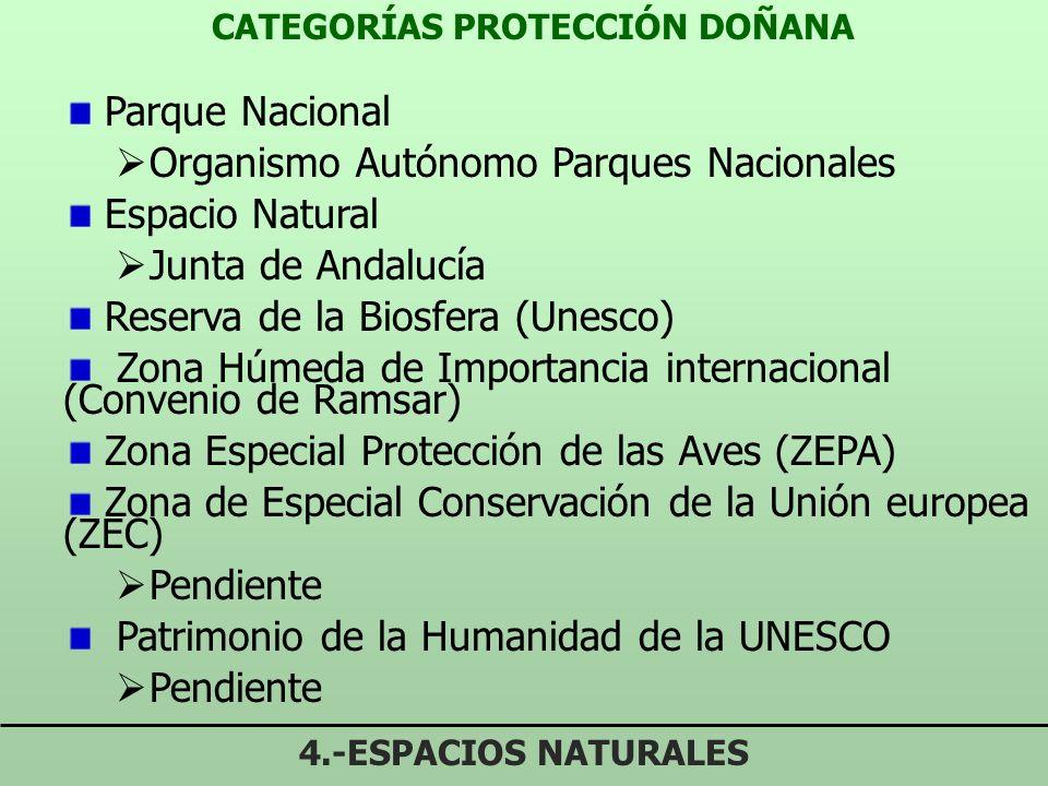 CATEGORÍAS PROTECCIÓN DOÑANA 4.-ESPACIOS NATURALES Parque Nacional Organismo Autónomo Parques Nacionales Espacio Natural Junta de Andalucía Reserva de la Biosfera (Unesco) Zona Húmeda de Importancia internacional (Convenio de Ramsar) Zona Especial Protección de las Aves (ZEPA) Zona de Especial Conservación de la Unión europea (ZEC) Pendiente Patrimonio de la Humanidad de la UNESCO Pendiente