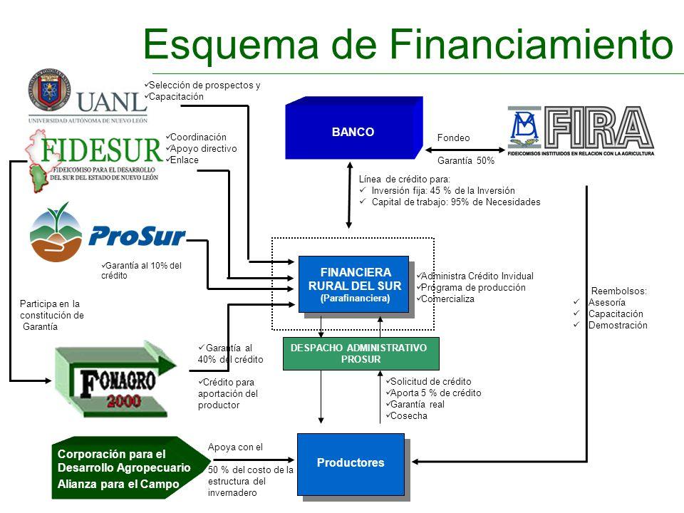 Esquema de Financiamiento DESPACHO ADMINISTRATIVO PROSUR FINANCIERA RURAL DEL SUR (Parafinanciera) Productores Fondeo Garantía 50% Reembolsos: Asesorí