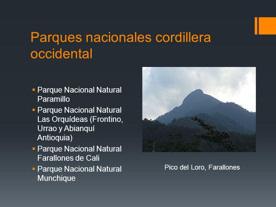 Parques nacionales cordillera occidental Parque Nacional Natural Paramillo Parque Nacional Natural Las Orquídeas (Frontino, Urrao y Abianquí Antioquia