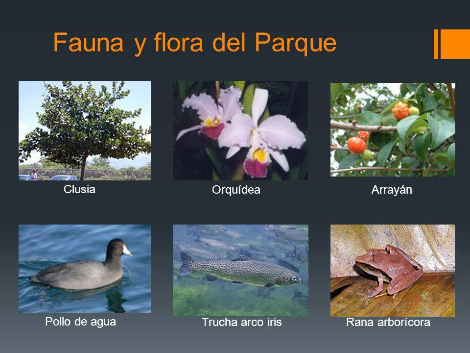Fauna y flora del Parque Clusia OrquídeaArrayán Pollo de agua Trucha arco irisRana arborícora