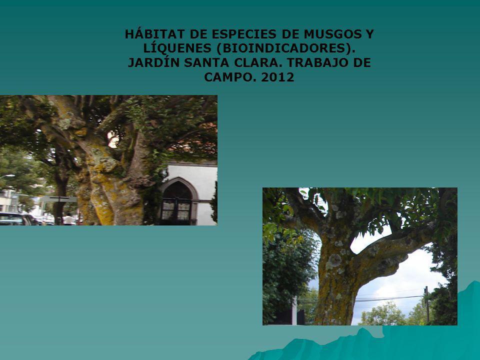 HÁBITAT DE ESPECIES DE MUSGOS Y LÍQUENES (BIOINDICADORES). JARDÍN SANTA CLARA. TRABAJO DE CAMPO. 2012
