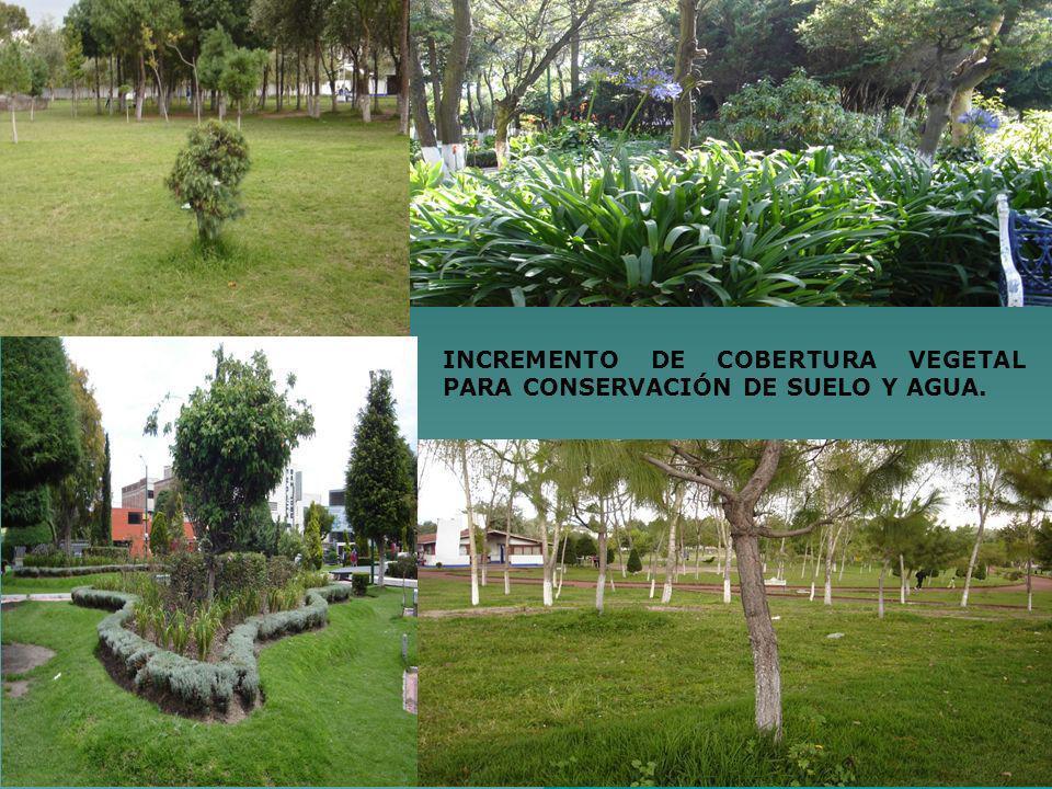 INCREMENTO DE COBERTURA VEGETAL PARA CONSERVACIÓN DE SUELO Y AGUA.