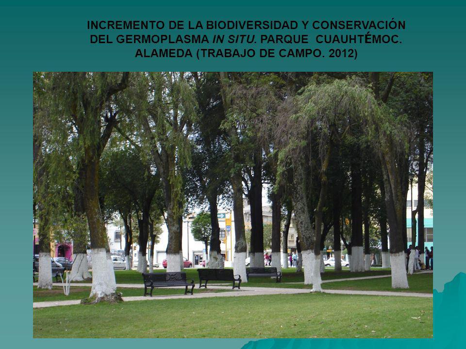 INCREMENTO DE LA BIODIVERSIDAD Y CONSERVACIÓN DEL GERMOPLASMA IN SITU. PARQUE CUAUHT É MOC. ALAMEDA (TRABAJO DE CAMPO. 2012)