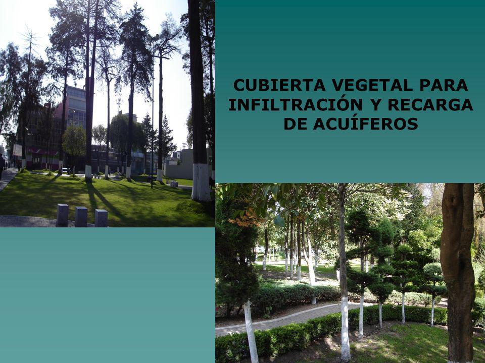 CUBIERTA VEGETAL PARA INFILTRACIÓN Y RECARGA DE ACUÍFEROS