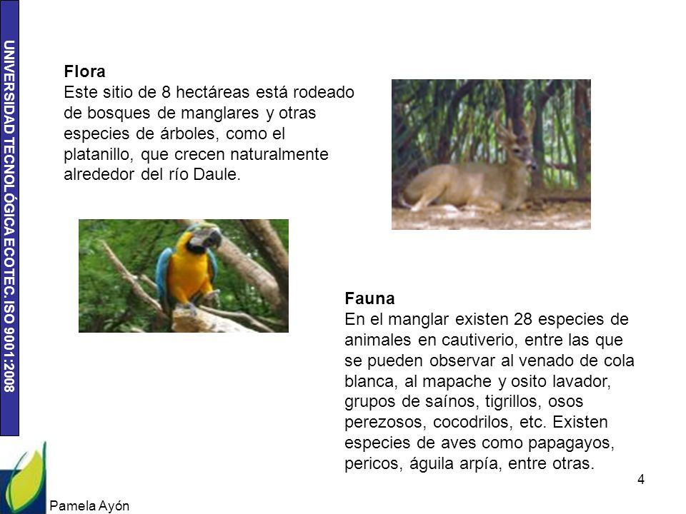 UNIVERSIDAD TECNOLÓGICA ECOTEC. ISO 9001:2008 Pamela Ayón 4 Flora Este sitio de 8 hectáreas está rodeado de bosques de manglares y otras especies de á