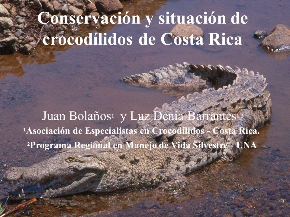 Conservación y situación de crocodílidos de Costa Rica Juan Bolaños 1 y Luz Denia Barrantes 1,2 1 Asociación de Especialistas en Crocodílidos - Costa Rica.