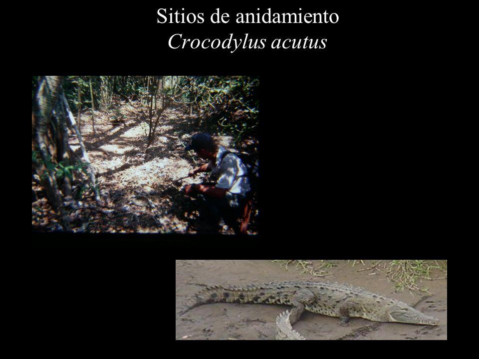 Sitios de anidamiento Crocodylus acutus