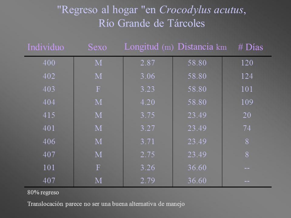 Regreso al hogar en Crocodylus acutus, Río Grande de Tárcoles 400M2.8758.80120 402M3.0658.80124 403F3.2358.80101 404M4.2058.80109 415M3.7523.4920 401M3.2723.4974 406M3.7123.498 407M2.7523.498 101F3.2636.60-- 407M2.7936.60-- IndividuoSexo Longitud (m) Distancia km # Días 80% regreso Translocación parece no ser una buena alternativa de manejo
