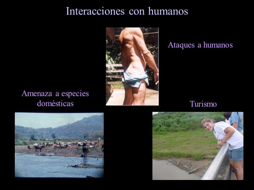 Interacciones con humanos Amenaza a especies domésticas Ataques a humanos Turismo