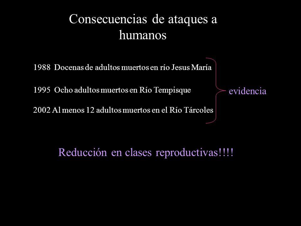 Consecuencias de ataques a humanos 1988 Docenas de adultos muertos en río Jesus María 1995 Ocho adultos muertos en Río Tempisque 2002 Al menos 12 adultos muertos en el Río Tárcoles Reducción en clases reproductivas!!!.