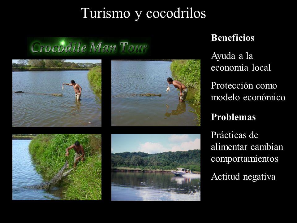 Turismo y cocodrilos Beneficios Ayuda a la economía local Protección como modelo económico Problemas Prácticas de alimentar cambian comportamientos Actitud negativa