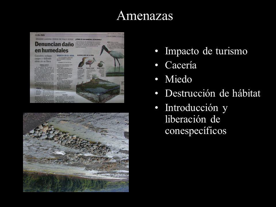 Amenazas Impacto de turismo Cacería Miedo Destrucción de hábitat Introducción y liberación de conespecíficos