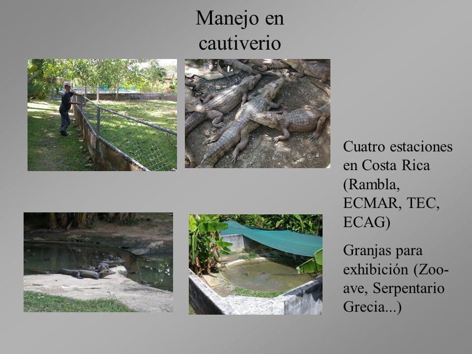 Manejo en cautiverio Cuatro estaciones en Costa Rica (Rambla, ECMAR, TEC, ECAG) Granjas para exhibición (Zoo- ave, Serpentario Grecia...)