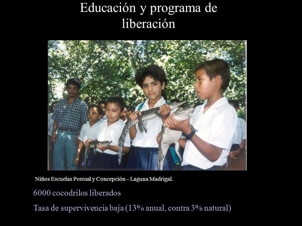 Educación y programa de liberación 6000 cocodrilos liberados Tasa de supervivencia baja (13% anual, contra 3% natural) Niños Escuelas Porosal y Concepción – Laguna Madrigal.