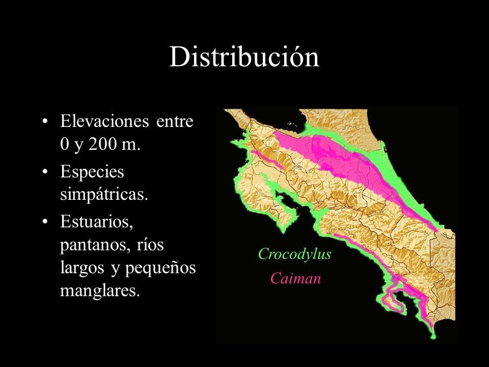 Distribución Elevaciones entre 0 y 200 m.Especies simpátricas.