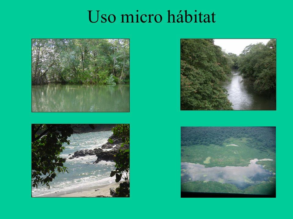 Uso micro hábitat