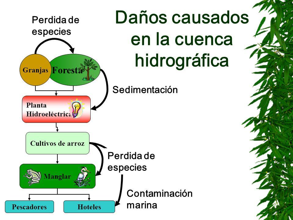 Daños causados en la cuenca hidrográfica Foresta Planta Hidroeléctrica Granjas Cultivos de arroz Manglar PescadoresHoteles Sedimentación Contaminación