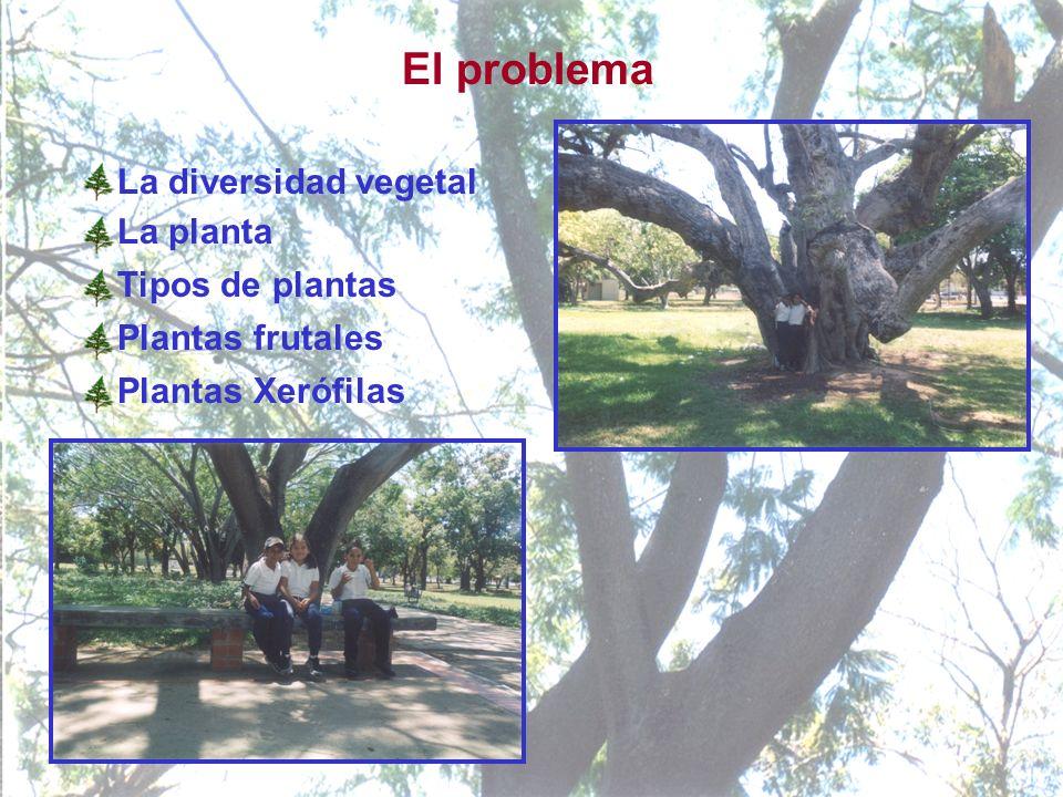 El problema La diversidad vegetal La planta Tipos de plantas Plantas frutales Plantas Xerófilas