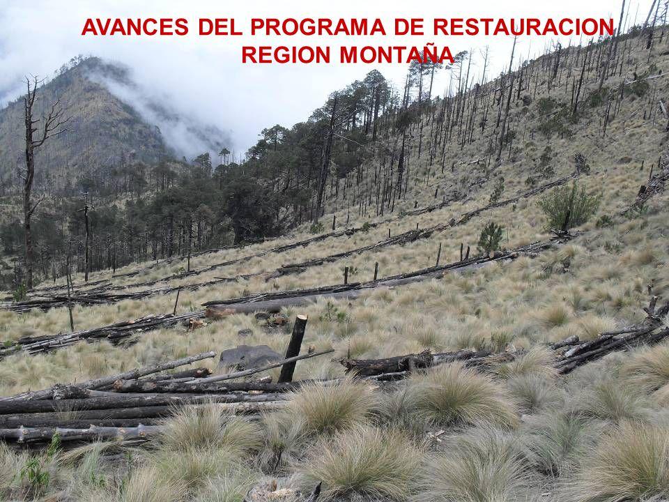 AVANCES DEL PROGRAMA DE RESTAURACION REGION MONTAÑA