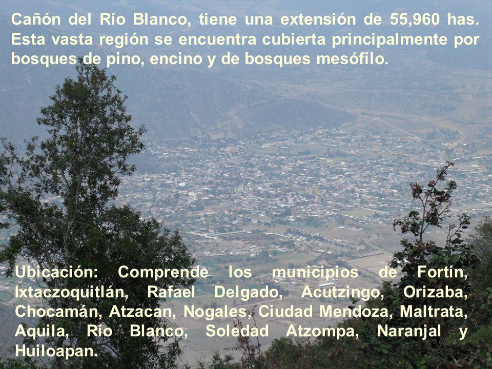 Cañón del Río Blanco, tiene una extensión de 55,960 has. Esta vasta región se encuentra cubierta principalmente por bosques de pino, encino y de bosqu