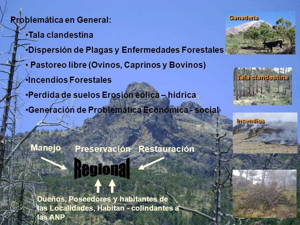 Problemática en General: Tala clandestina Dispersión de Plagas y Enfermedades Forestales Pastoreo libre (Ovinos, Caprinos y Bovinos) Incendios Foresta