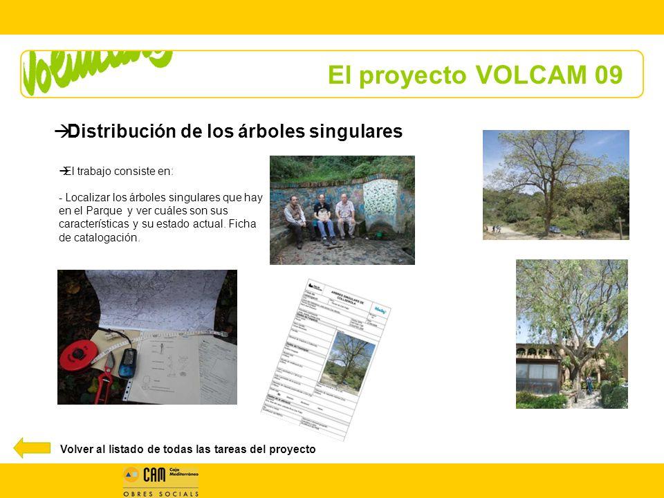 El proyecto VOLCAM 09 El trabajo consiste en: - Localizar los árboles singulares que hay en el Parque y ver cuáles son sus características y su estado actual.