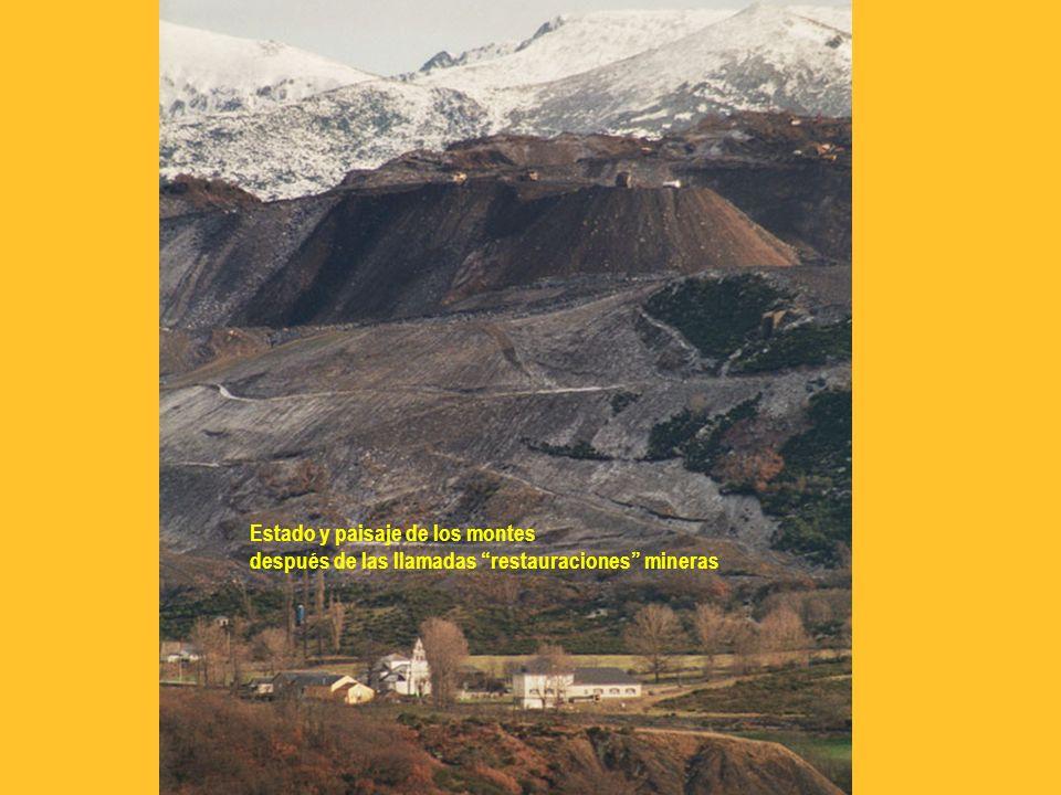 Estado y paisaje de los montes después de las llamadas restauraciones mineras