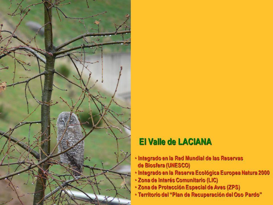 El Valle de LACIANA El Valle de LACIANA Integrado en la Red Mundial de las Reservas Integrado en la Red Mundial de las Reservas de Biosfera (UNESCO) de Biosfera (UNESCO) Integrado en la Reserva Ecológica Europea Natura 2000 Integrado en la Reserva Ecológica Europea Natura 2000 Zona de Interés Comunitario (LIC) Zona de Interés Comunitario (LIC) Zona de Protección Especial de Aves (ZPS) Zona de Protección Especial de Aves (ZPS) Territorio del Plan de Recuperación del Oso Pardo Territorio del Plan de Recuperación del Oso Pardo