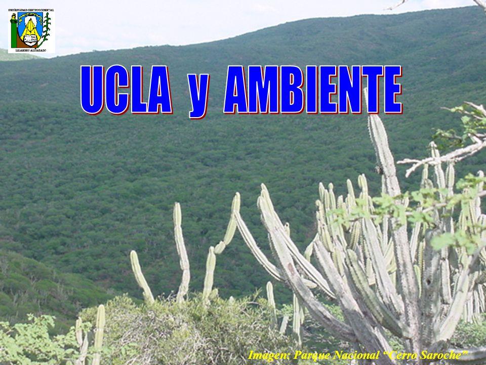 UNIVERSIDAD Actualización de currículos Nuevas carreras Dimensión Ambiental Formación Ambiental Asumir políticas ambientales Aportes para el desarrollo sostenible de la región SECTOR AMBIENTE VARIABLE: UCLA Y AMBIENTE