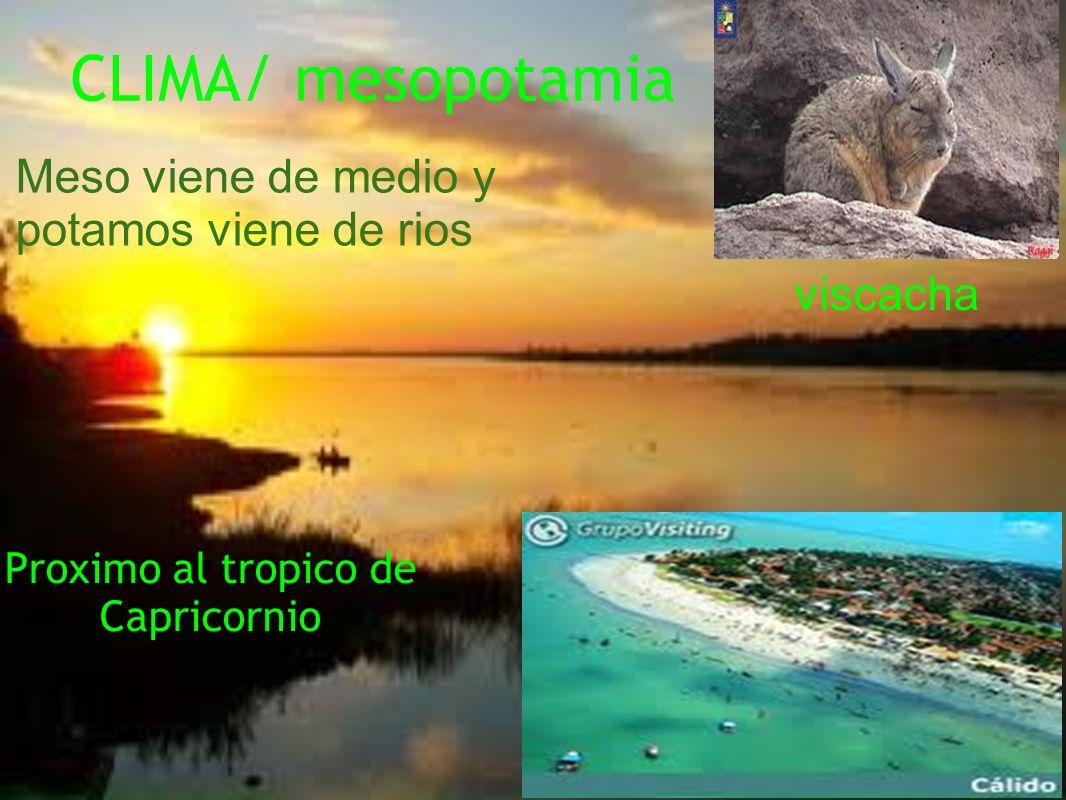 CLIMA/ mesopotamia Proximo al tropico de Capricornio Meso viene de medio y potamos viene de rios viscacha