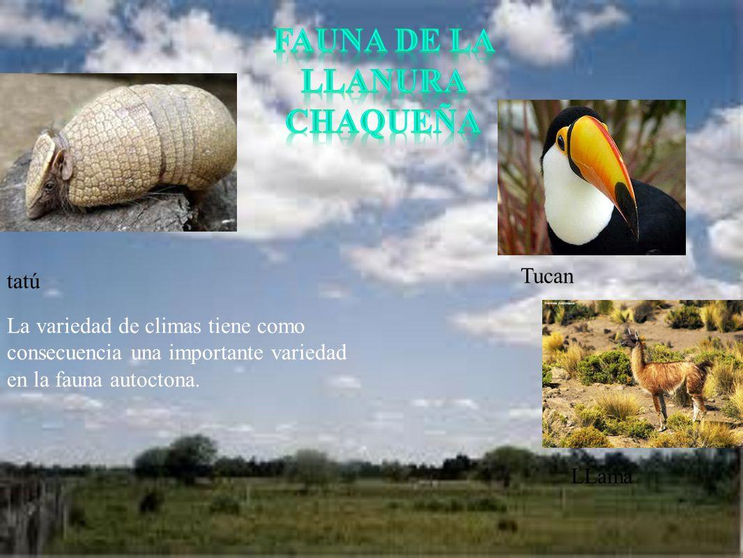 La variedad de climas tiene como consecuencia una importante variedad en la fauna autoctona. tatú Tucan LLama