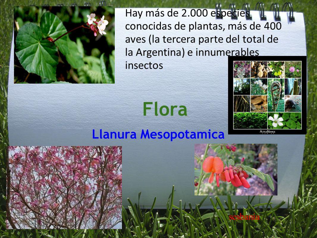 Flora Llanura Mesopotamica Hay más de 2.000 especies conocidas de plantas, más de 400 aves (la tercera parte del total de la Argentina) e innumerables